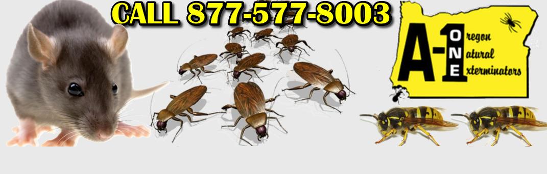 Pest Control Eugene